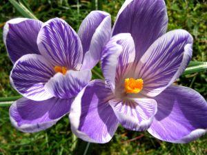 764211_spring_flowers