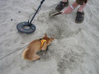 Beach 007